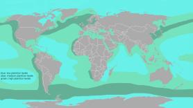 1024px-World_plankton_prevailence